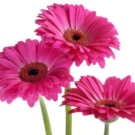 Blomst kryssord